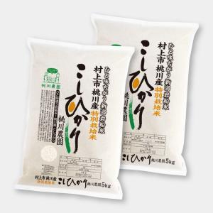 令和2年産 新潟県村上市 岩船米 特別栽培コシヒカリ10kg(5kg×2) momokawanouen-store