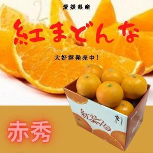 紅まどんな 【赤秀】 1.5kg(6〜7個) JA全農えひめのオリジナル品種 「紅まどんな」JA全農...