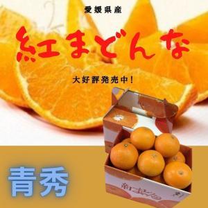 みかん 紅まどんな 【青秀】 1.5kg×2(L〜2L)(7〜8個)