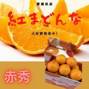 みかん 紅まどんな 【赤秀】 1.5kg×2(L〜2L)(7〜8個)