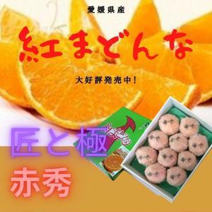 紅まどんな 【赤秀】3〜4L約3kg(8〜10個) JA全農えひめのオリジナル品種 「紅まどんな」J...