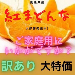 みかん 紅まどんな 【訳あり・家庭用】 サイズおまかせ(4kg)