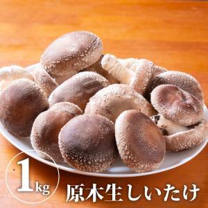 原木生しいたけ さまざまな味わい方が出来る 椎茸 シイタケ 野菜 きのこ キノコ 茸 (久保しいたけ)【WS】 monmiya