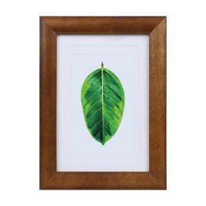 ケンコートキナー 写真たて ゴムの木 2L ハガキ Lサイズ対応 ブラウン フォトフレーム