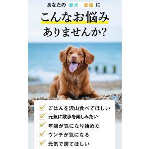 【DM便不可】犬・猫のサプリメント・免疫を維持し元気・食欲を保つ コルディM30g/コルディG30g|monolith-net|04