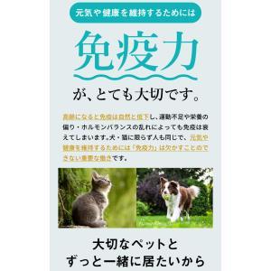 【DM便不可】犬・猫のサプリメント・免疫を維持し元気・食欲を保つ コルディM30g/コルディG30g|monolith-net|05