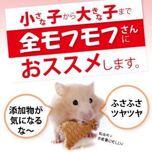 【医薬品グレード】犬猫の肝臓と皮膚を守るサプリ。ALP/ALT/AST肝機能が心配な子にプラセンタ12000(5gパック)|monolith-net|16