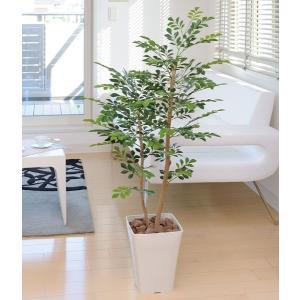 人工観葉植物(光触媒加工)、光の楽園 トネリコ 1.2m