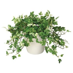 光触媒観葉植物テーブルタイプ(人工植物) アンペロシスアイビーM|montbrette