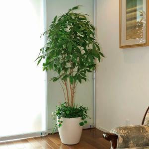 光触媒 観葉植物(人工観葉植物)光の楽園 パキラ 1.8m 植栽付|montbrette