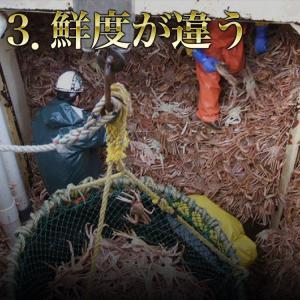 カニ かに 蟹 特大ずわいがに脚5kg ズワイガニ ボイルかに  冷凍便  あすつく対応|morigen|05