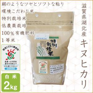 低農薬 キヌヒカリ 2kg 令和2年産 白米 100%有機肥料特別栽培米 1等米 滋賀県環境こだわり米|morikawa-noujou