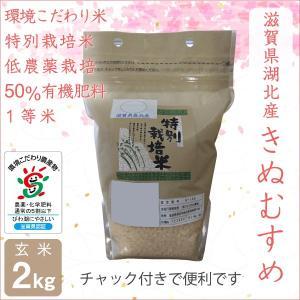 低農薬 きぬむすめ 2kg 令和2年産  玄米 50%有機肥料特別栽培米 1等米 滋賀県環境こだわり米 morikawa-noujou