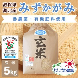 令和2年 滋賀県産 みずかがみ 玄米 5kg|morikawa-noujou