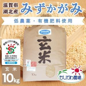 令和2年 滋賀県産 みずかがみ 玄米 10kg|morikawa-noujou