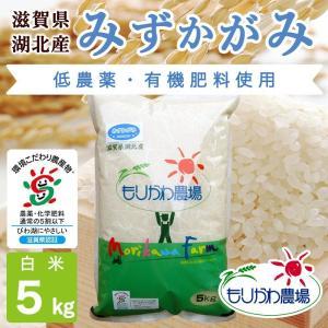 令和2年 滋賀県産 みずかがみ 白米 5kg|morikawa-noujou