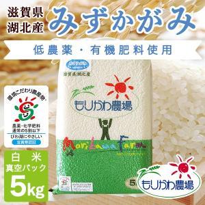 令和2年 滋賀県産 みずかがみ 真空パック白米5kg|morikawa-noujou