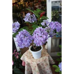18・仕立て直し・自然開花・やや秋色アジサイ 品種不明(siab10)5号鉢|morinouen-store