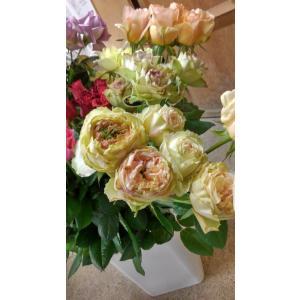19・NEW・バラ苗・切り花品種接ぎ木 ハッピーウェディングケイ2〜3号
