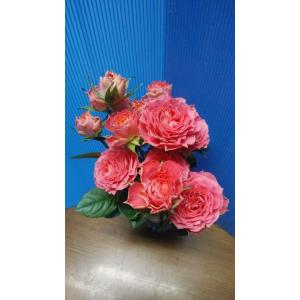 19・NEW・バラ苗・切り花品種接ぎ木 sp−kn30−137 2〜3号|morinouen-store