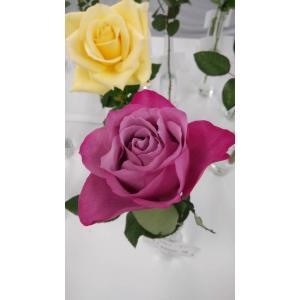 19・NEW・バラ苗・切り花品種接ぎ木 kn30-78パープルウェーブ 2〜3号|morinouen-store