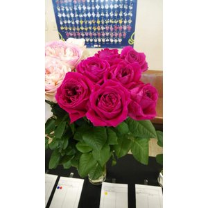 19・NEW・バラ苗・切り花品種接ぎ木 kn511 2〜3号|morinouen-store
