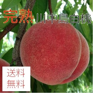 大玉 川中島白桃 3kg(9〜12個)|morioka-ringo