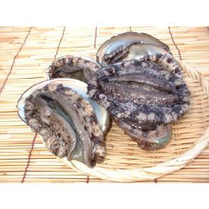 あわび 玄海灘 響灘産 活 黒アワビ(1ヶ)200g〜300g|morita