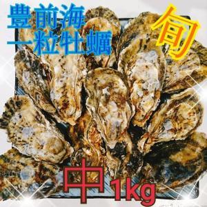 一粒牡蠣 (かき)中 豊前海産カキ 1kg|morita