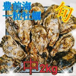 一粒牡蠣 (かき)中 豊前海産カキ 2kg|morita