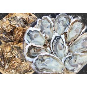 一粒牡蠣 (かき)大 豊前海産カキ 3kg|morita