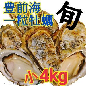 一粒牡蠣 (かき)小 豊前海産カキ 4kg|morita