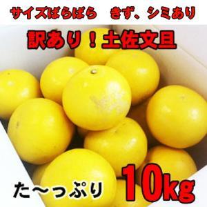 追熟!訳あり土佐文旦10kg ご家庭用特別価格 サイズM〜2L(10kg)高知県産