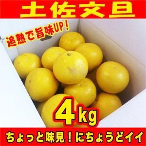 追熟!訳あり土佐文旦4kg ご家庭用特別価格 サイズM〜2L(4kg)高知県産 2月中旬より出荷開始
