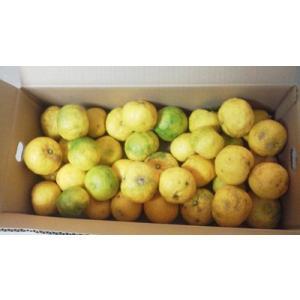 訳あり柚子2Kg 高知県産の無農薬栽培の実生柚子