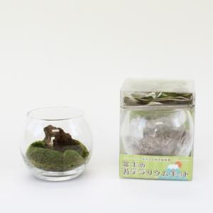 富士の苔テラリウムキット