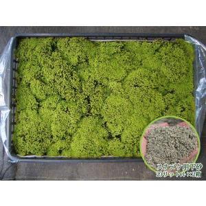 苔 スナゴケお庭用セット(約1平米)
