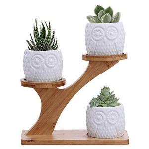 Fenalo 植木鉢 サボテン用 多肉植物鉢 プランター土器 3点セット 竹製フラワースタンド付き ミ二観葉植物ポッ|mount-n-online