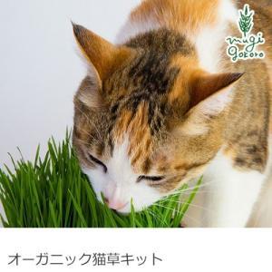グリーンフィールド プロジェクト オーガニック ねこ草栽培キット箱 (種2袋付)  箱パッケージ 購入金額別特典あり 正規品 天然|mugigokoro-y