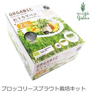 グリーンフィールド プロジェクト おうちでベジ ブロッコリースプラウトの種入り スプラウト栽培キット 購入金額別特典あり オーガニック|mugigokoro-y
