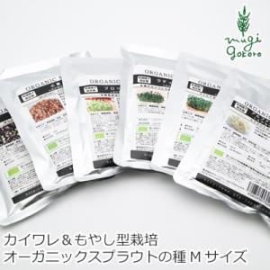 グリーンフィールド プロジェクト スプラウト マイクログリーン(カイワレ型)ツイスト(もやし型) 栽培可 Mサイズ 購入金額別特典あり|mugigokoro-y