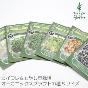グリーンフィールド プロジェクト スプラウト マイクログリーン(カイワレ型)ツイスト(もやし型) 栽培可 Sサイズ 購入金額別特典あり|mugigokoro-y