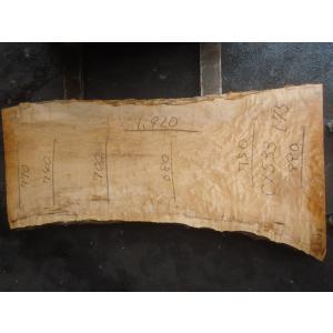 カエデ 一枚板 テーブル 原板 1920×890×75|mukusakura