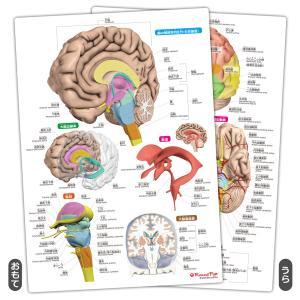 【アウトレット】脳まるわかりシート|muscle