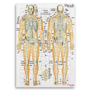 【アウトレット】全身の骨 日本語名称付 「骨ジグソーパズル」B4サイズ|muscle