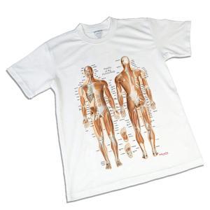 筋肉チャートデザイン(筋T) スポーツTシャツ|muscle