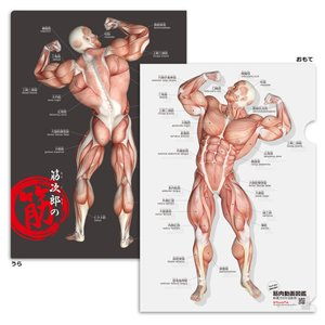 筋次郎の筋 クリアファイル【5枚セット】 muscle