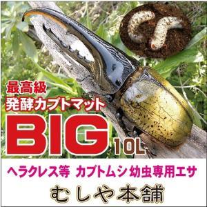 高カロリー カブトムシ幼虫のエサはコレ エノキダケ廃菌床発酵カブトムシマット「BIG」10リットル