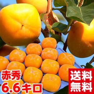 新潟県産 おけさ柿 赤秀 約6.6kg|muskmelon