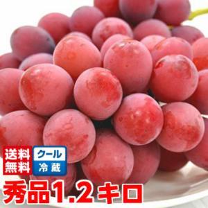長野県産クイーンニーナ 秀品4Lサイズ 1.2Kg|muskmelon